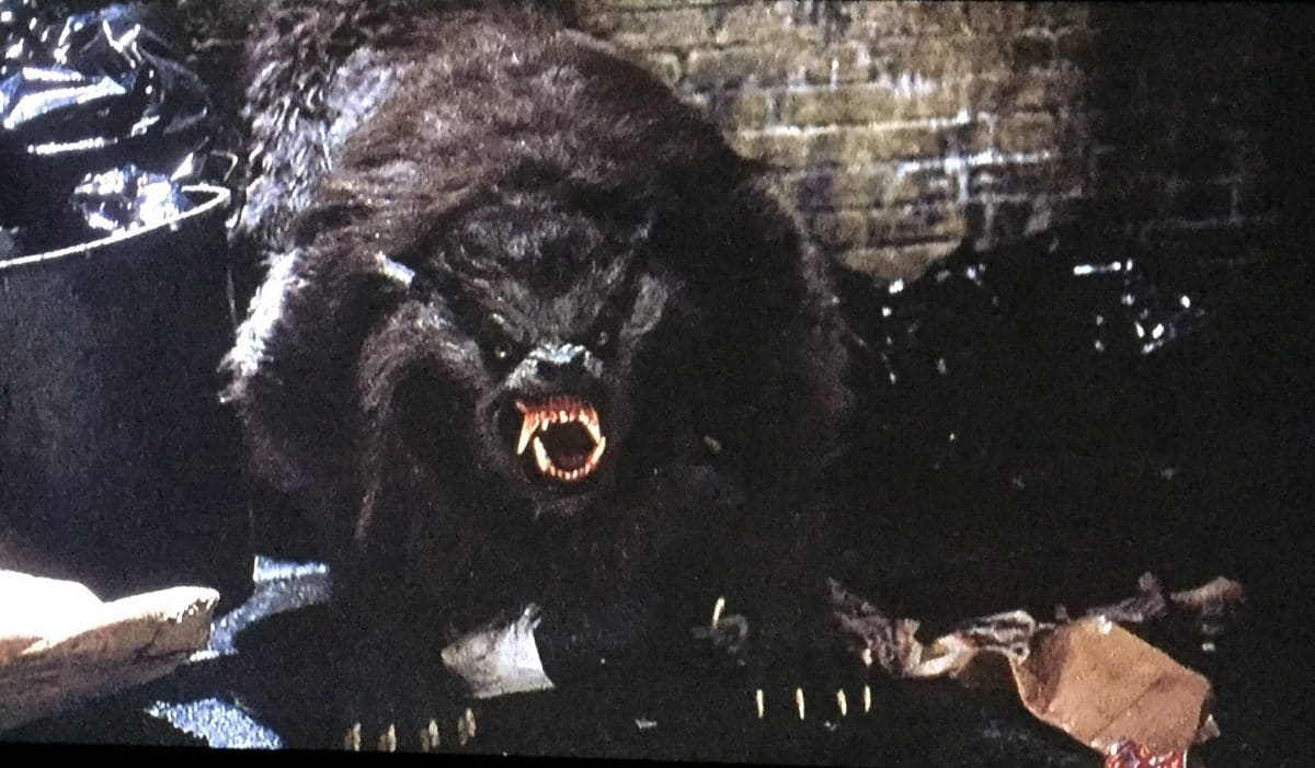 an-american-werewolf-in-london-werewolf-horror-at-its-finest