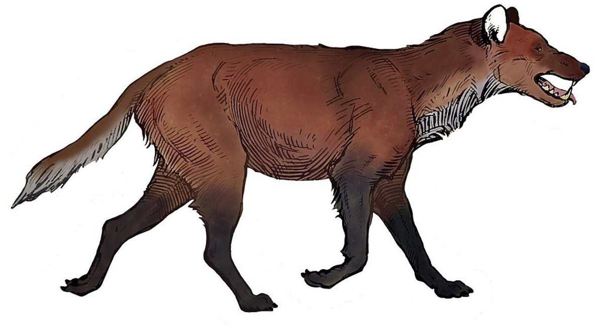 Dire Wolf Facts: An Ancient Animal in the Family Canidae
