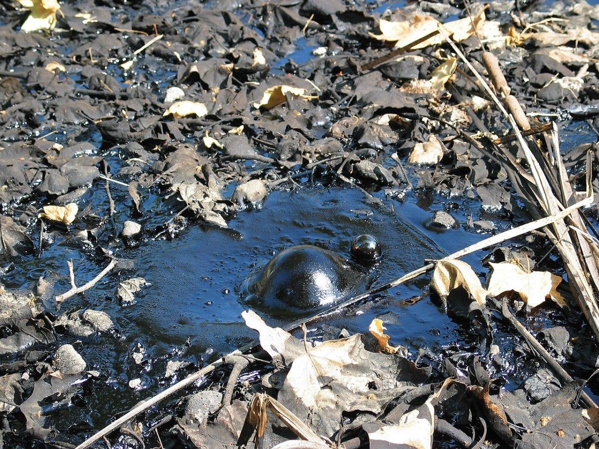 A bubble of natural asphalt or brea at the La Brea Tar Pits