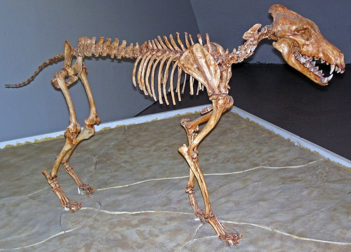 A dire wolf skeleton