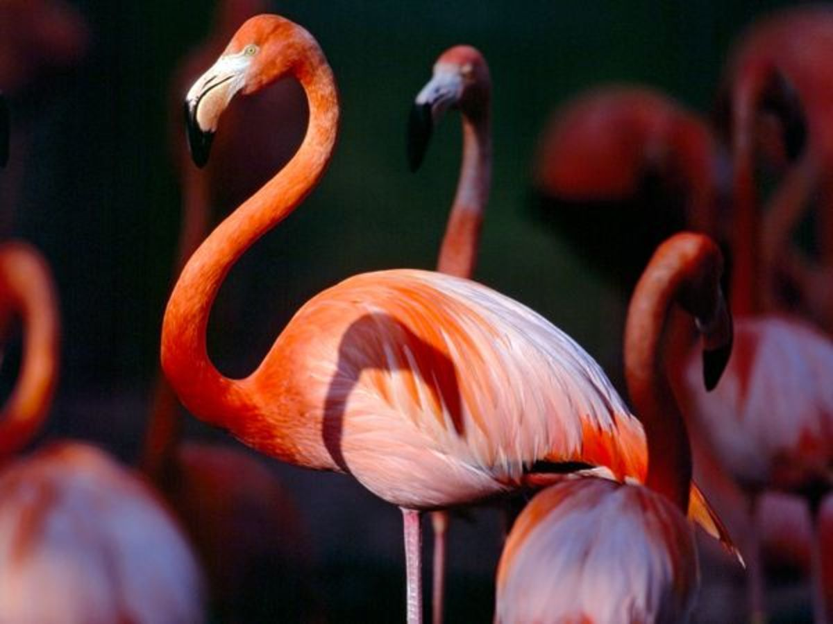 most-beautiful-birds-from-western-north-america