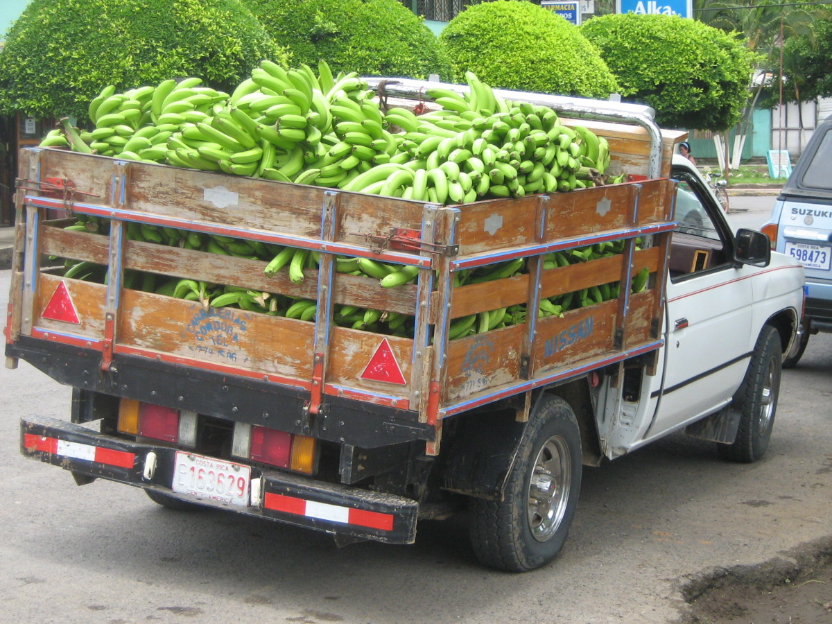 A Truck Load Of Bananas On Their Way To Market In Costa Rica