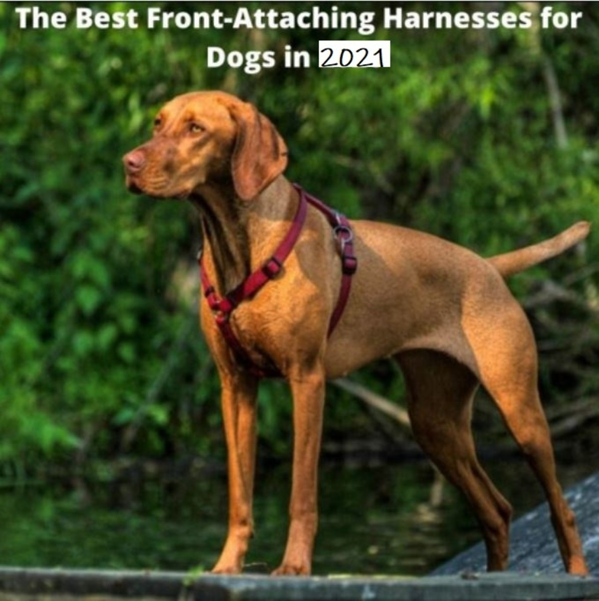 Best Front-Attaching Harnesses for Dogs in 2021