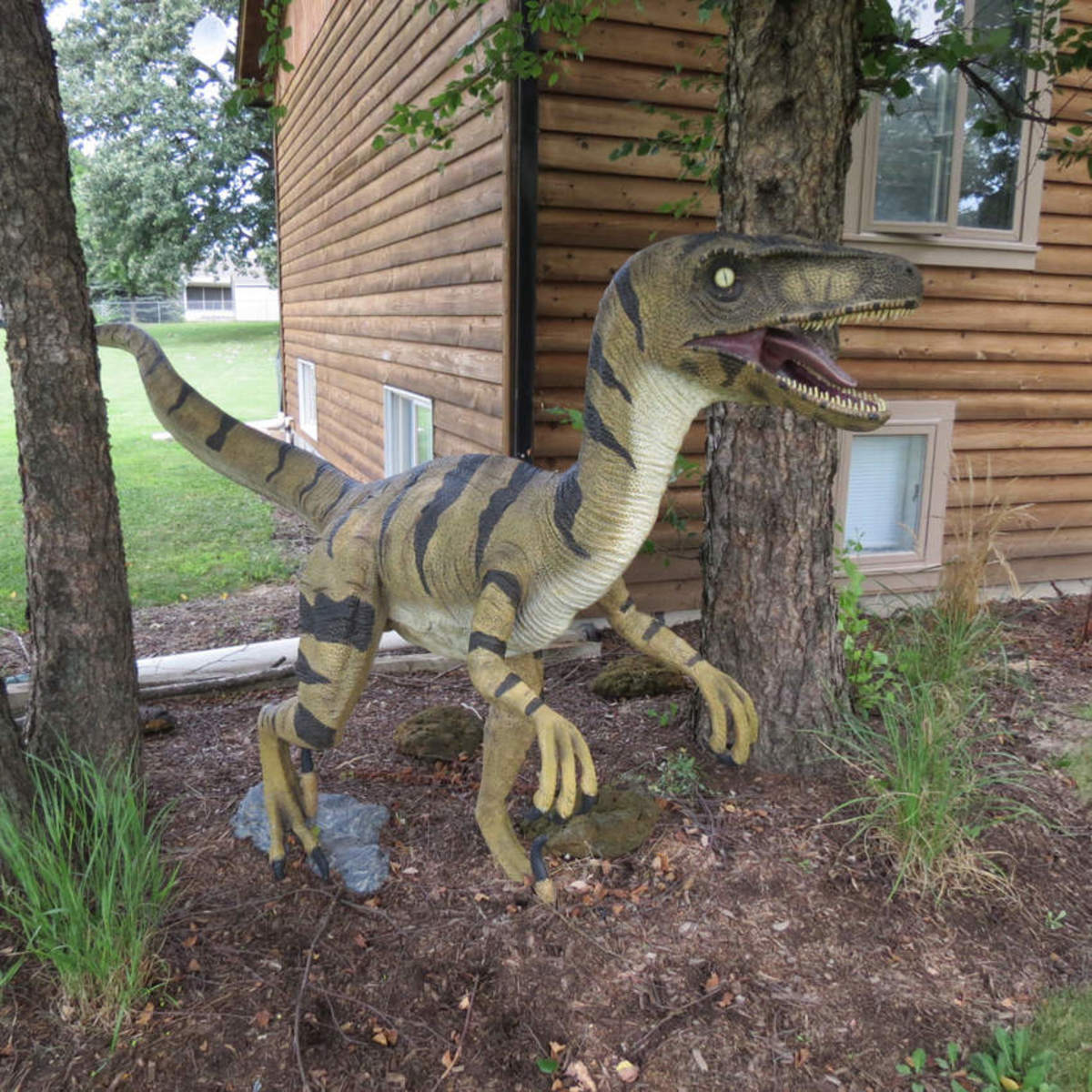 Play rap music in the house with the window open when you want to keep your raptor playing outside!