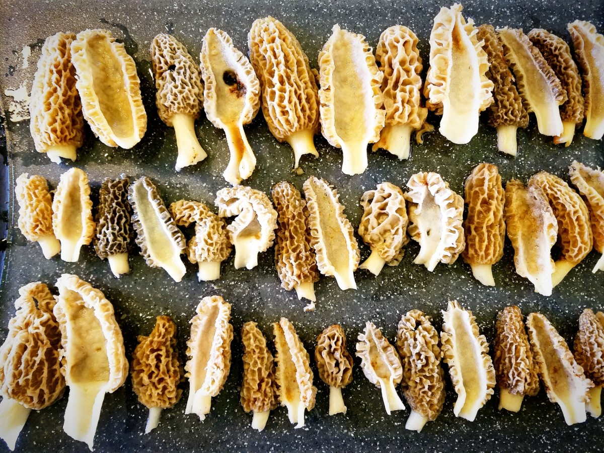 Morel mushrooms sliced in half.