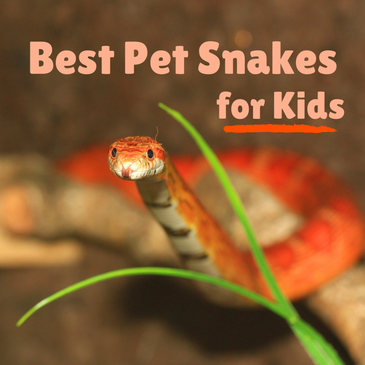 Learn about some snakes that make great pets for children or first-time snake owners!