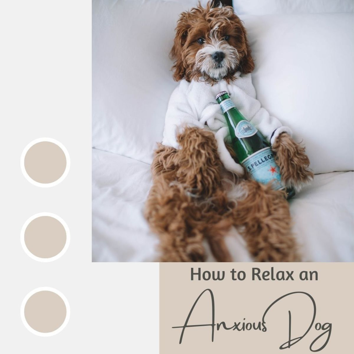 Why is my dog so tense? Learn how to relax your anxious pooch.