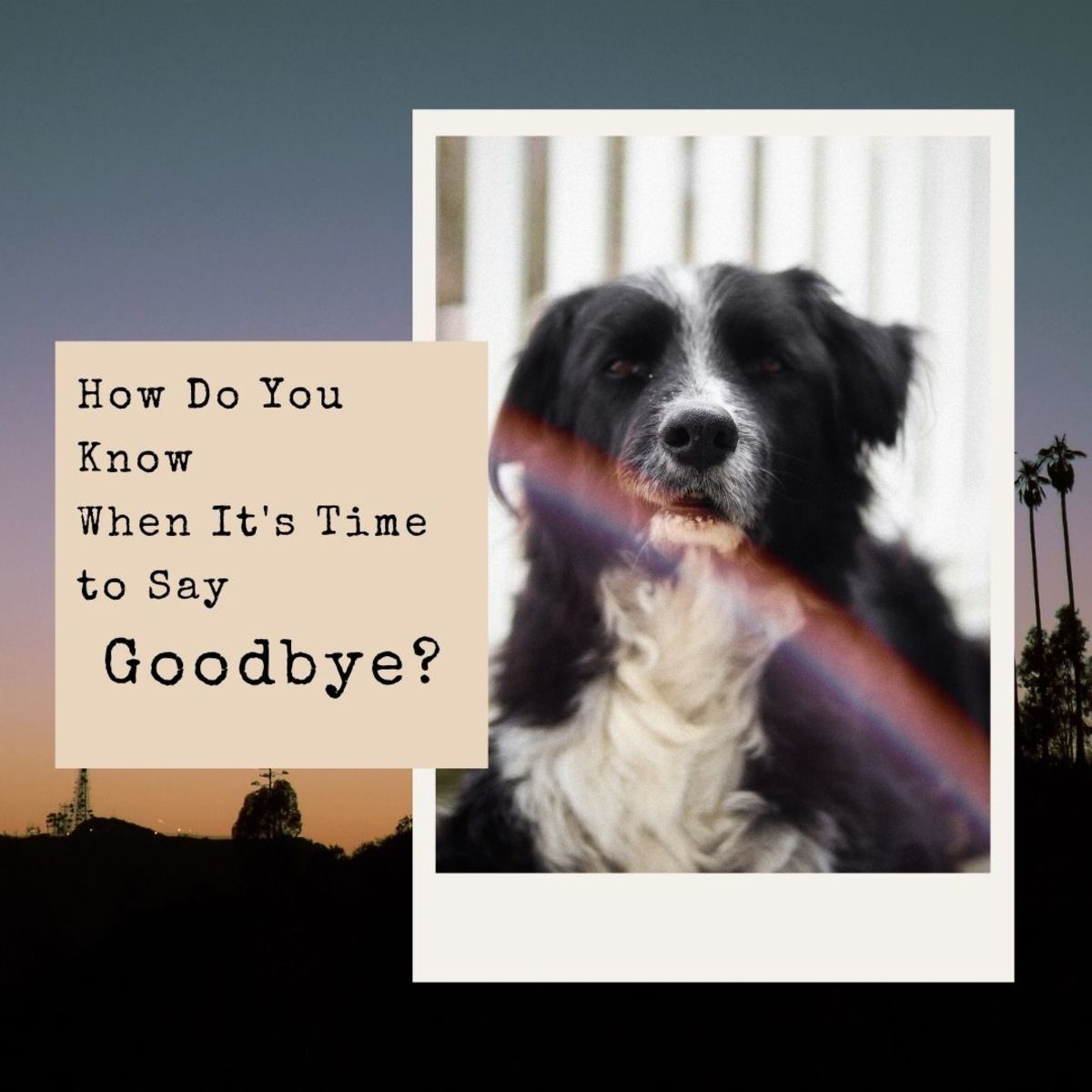 How do you know when it's time to say goodbye to your beloved friend?