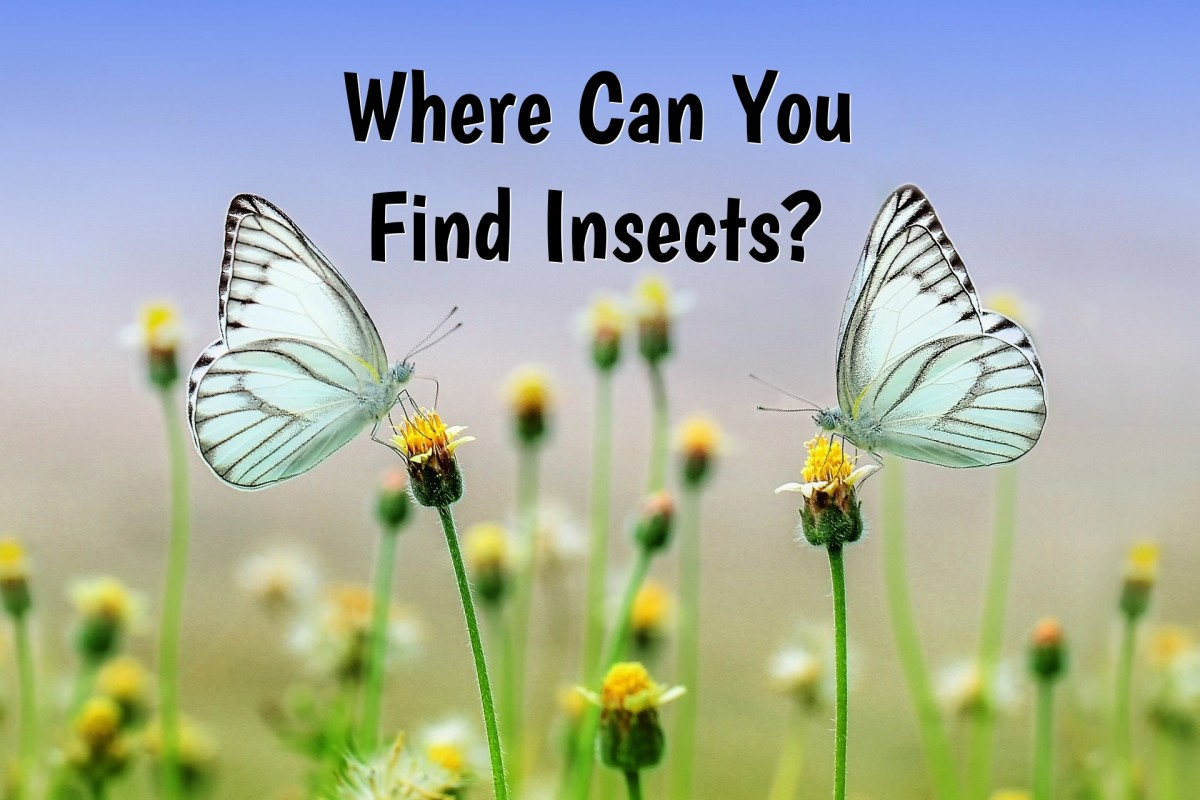 Where Can You Find Insects? An Easy Guide for Beginning Entomologists