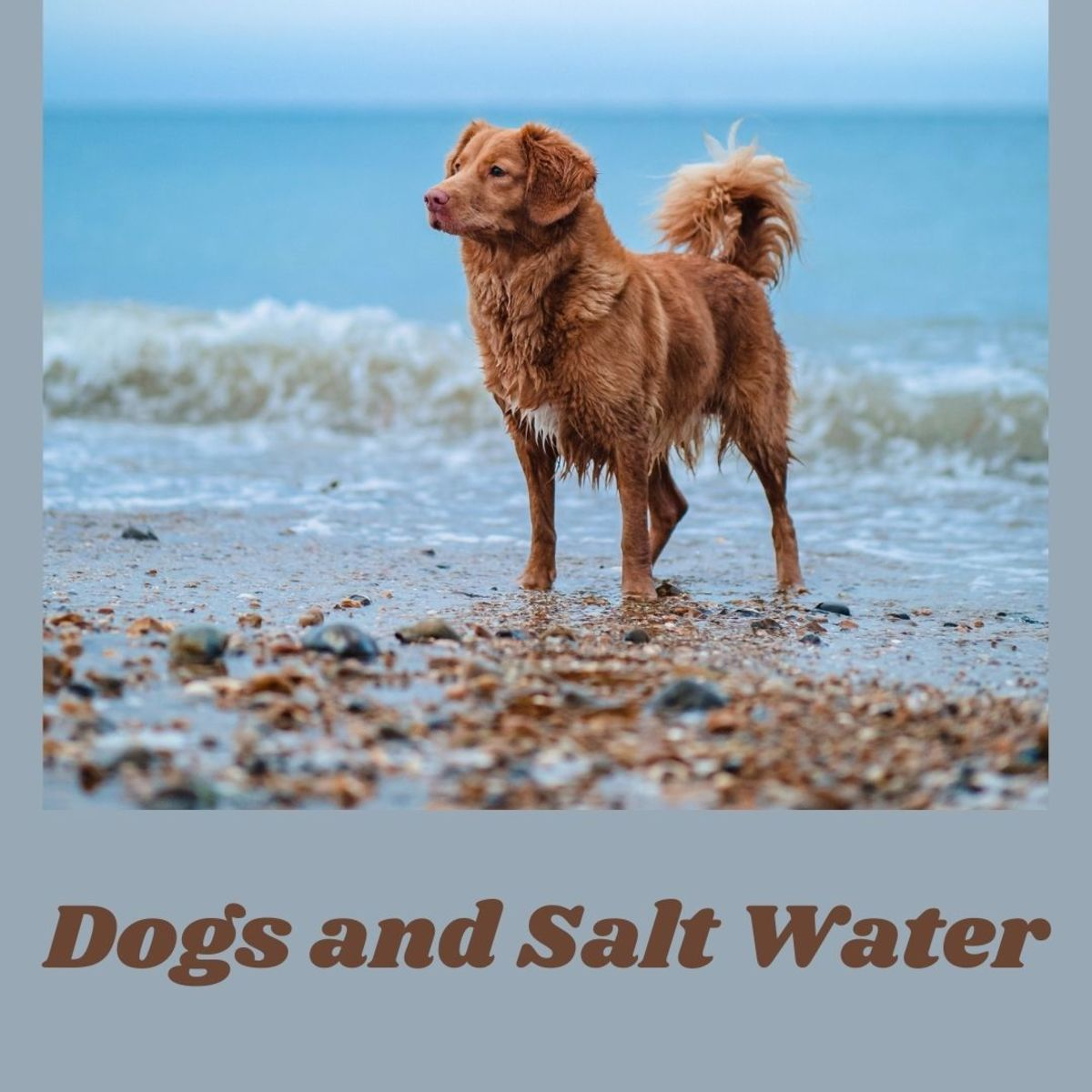 When dogs drink salt water, they can get beach diarrhea.