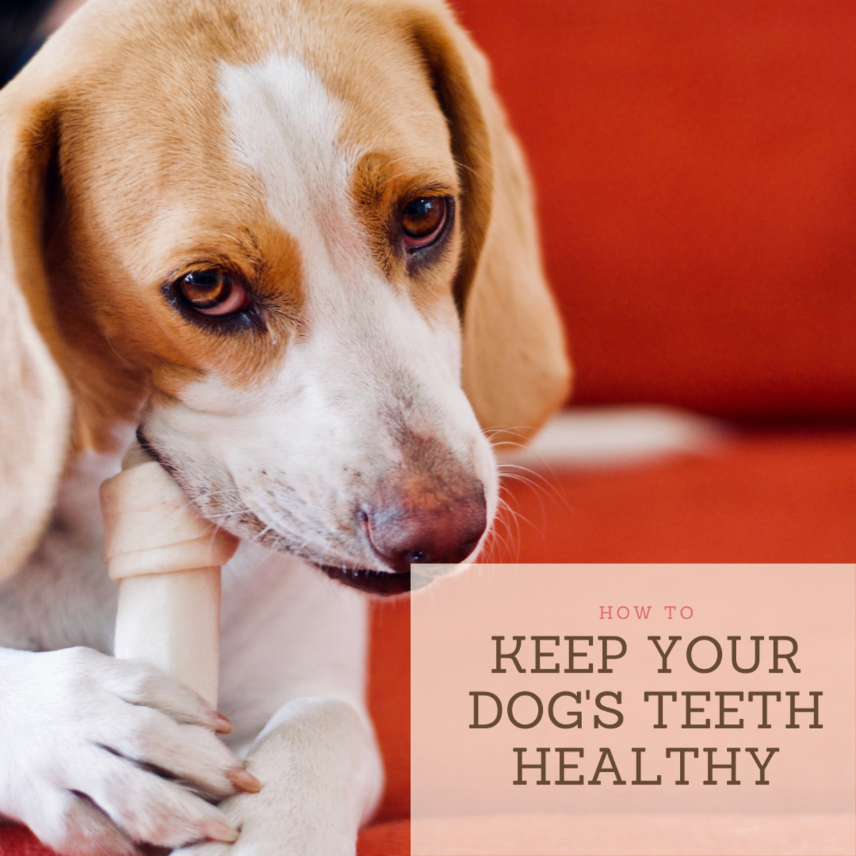 Oral health is just as important in dogs as it is in humans.