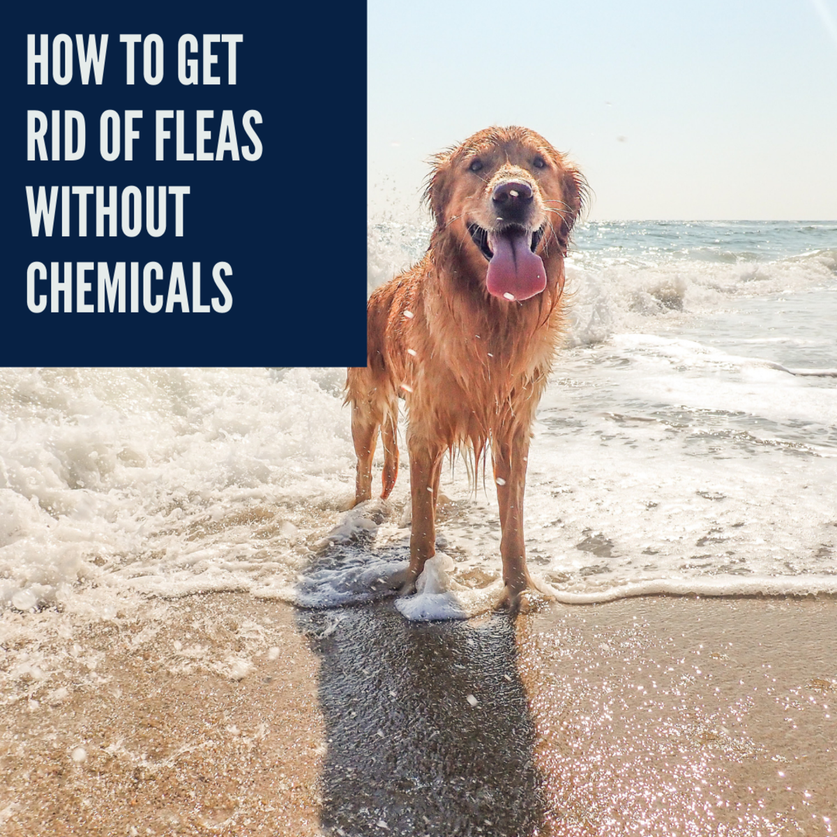 There are ways to deal with fleas without using chemicals.