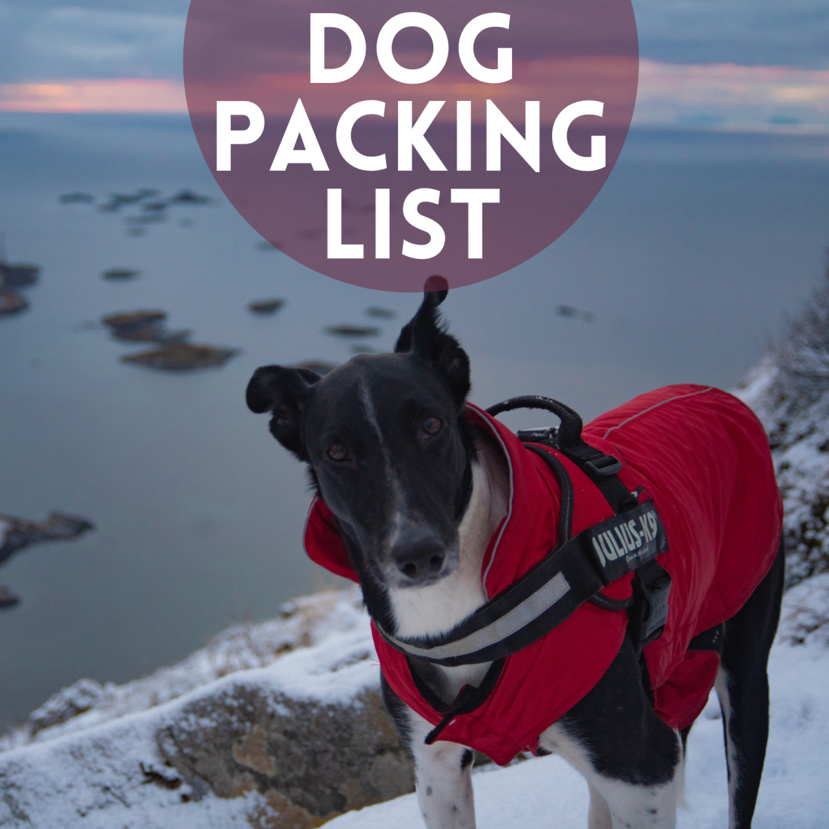 A list of things to pack for your dog for a camping or hiking trip.