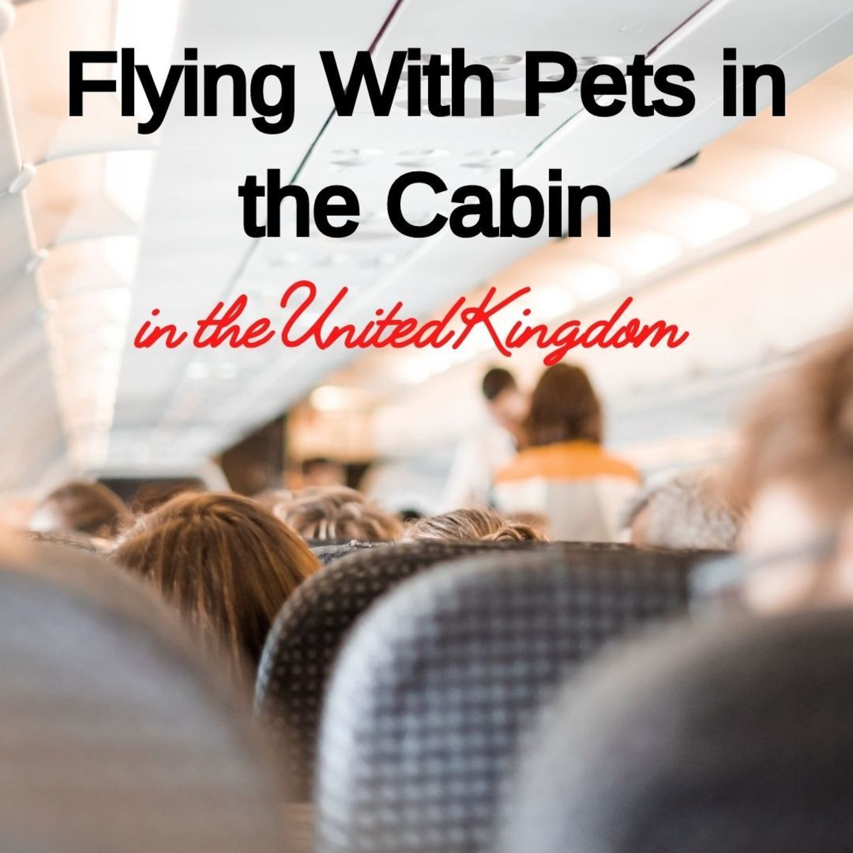 Flying With Pets in the Cabin to the United Kingdom