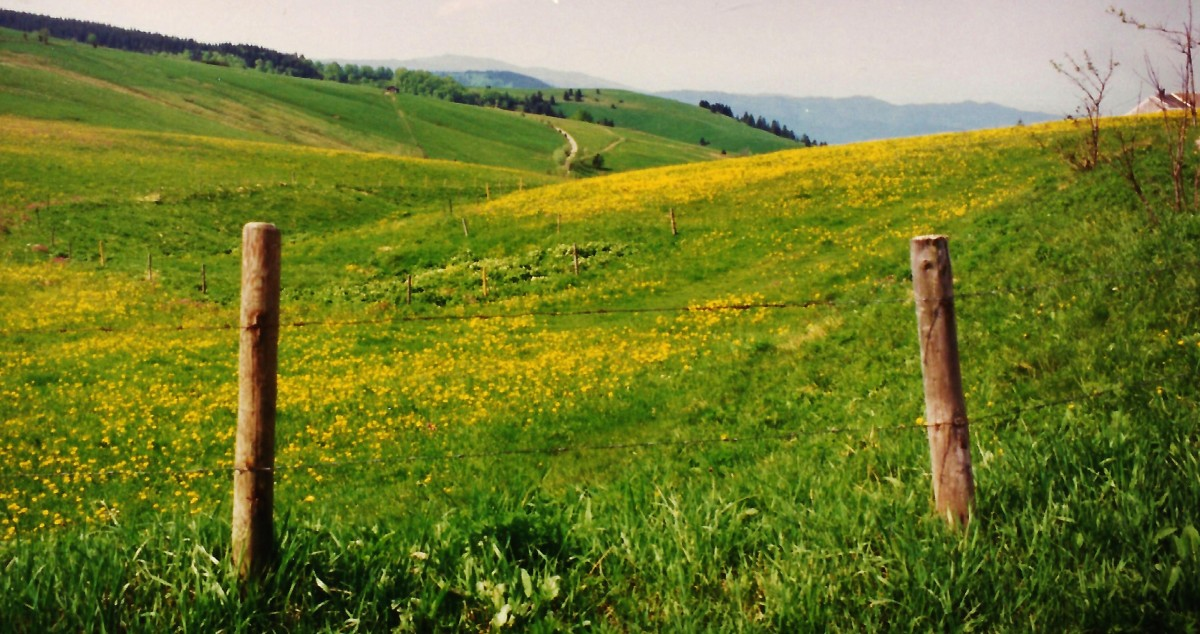Feldberg area of the Black Forest is the highest mountain.