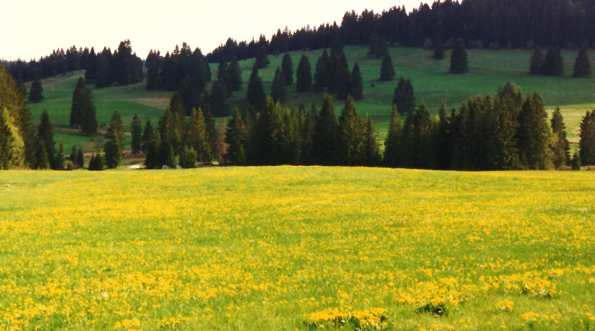 Approaching the Feldberg area of the Black Forest