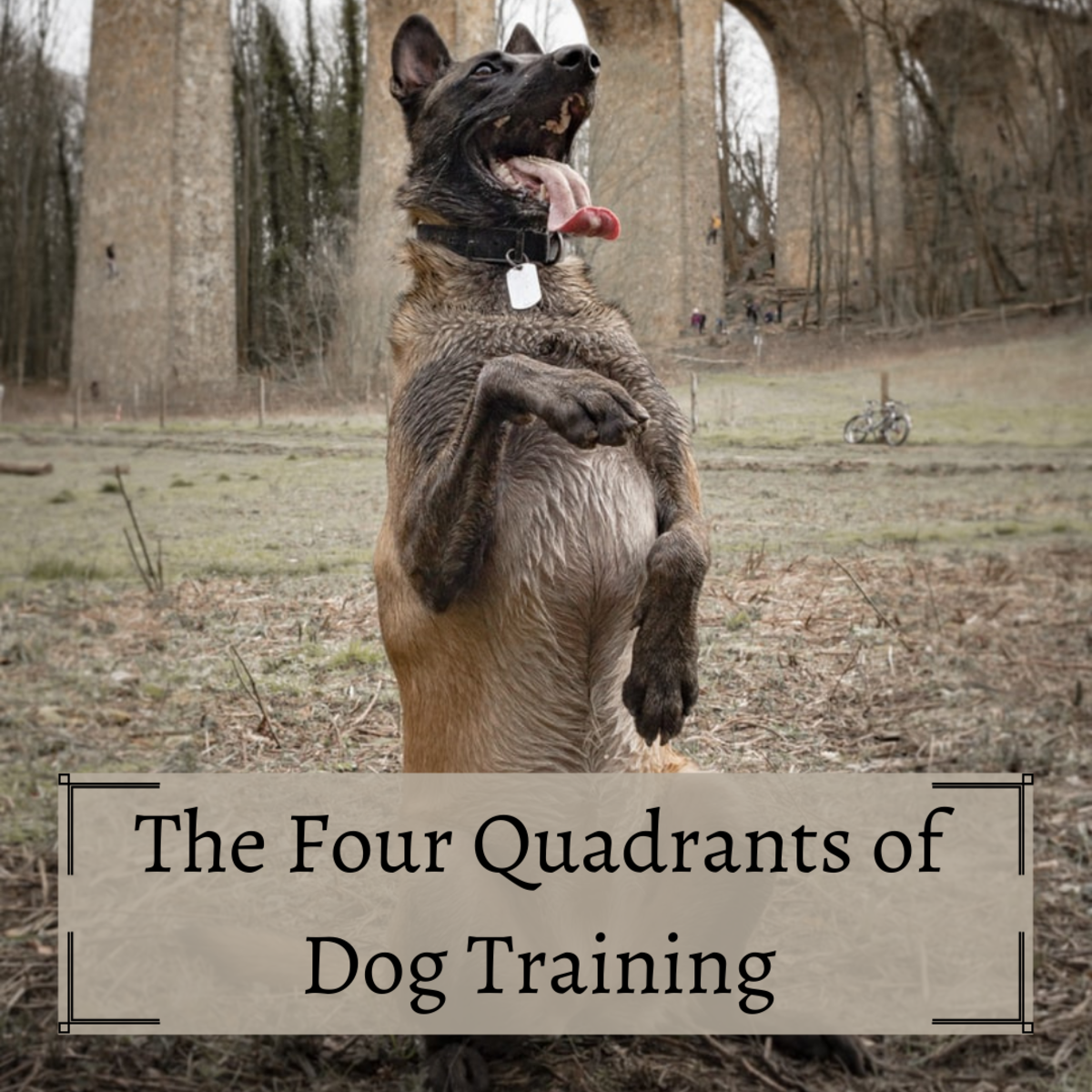 You don't need to be a certified dog trainer to learn the dynamics of training—all it takes is an understanding of how dogs react to their surroundings and how their environment affects them.
