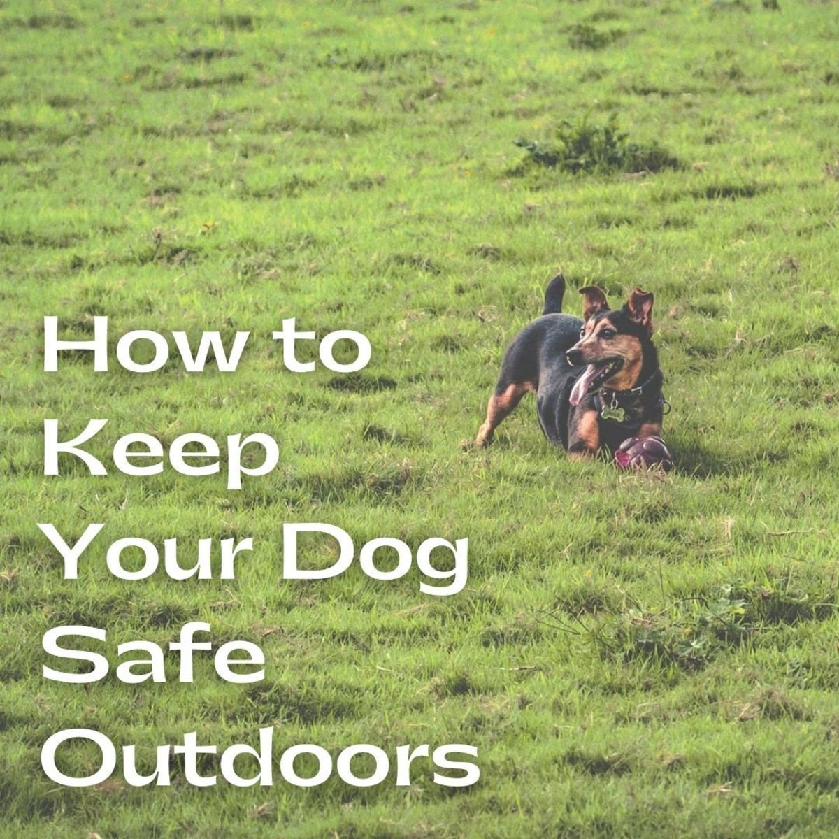 Dogs love to go with us everywhere, especially outside. But how can you keep them safe?