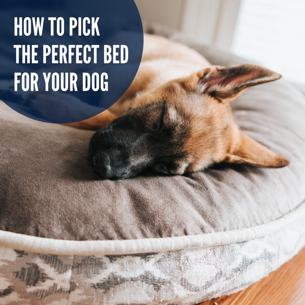 It is important for dogs to have a bed they love.
