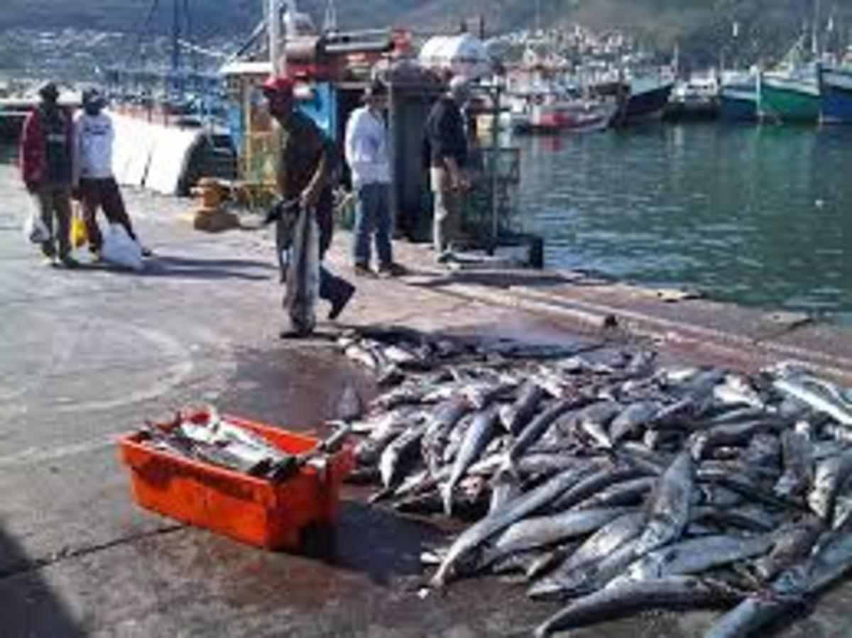 Fishing in the Cape Province is a big source of income and you can select it as if you just about caught it yourself.