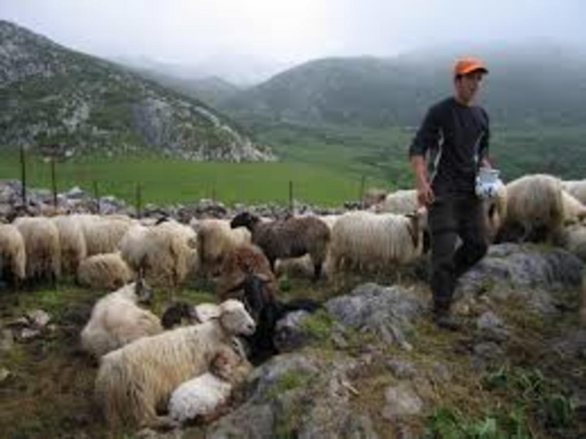 One shepherd with a small flock of sheep, these might be the first people that were living in the caves, and later on moved to live in the town