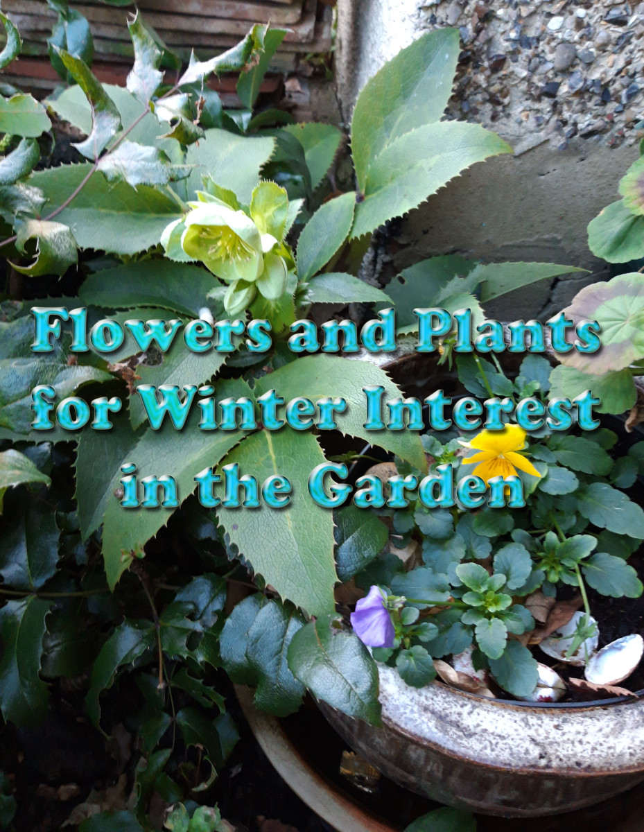 flowers-that-bloom-in-winter-and-plants-that-give-winter-interest-in-the-garden