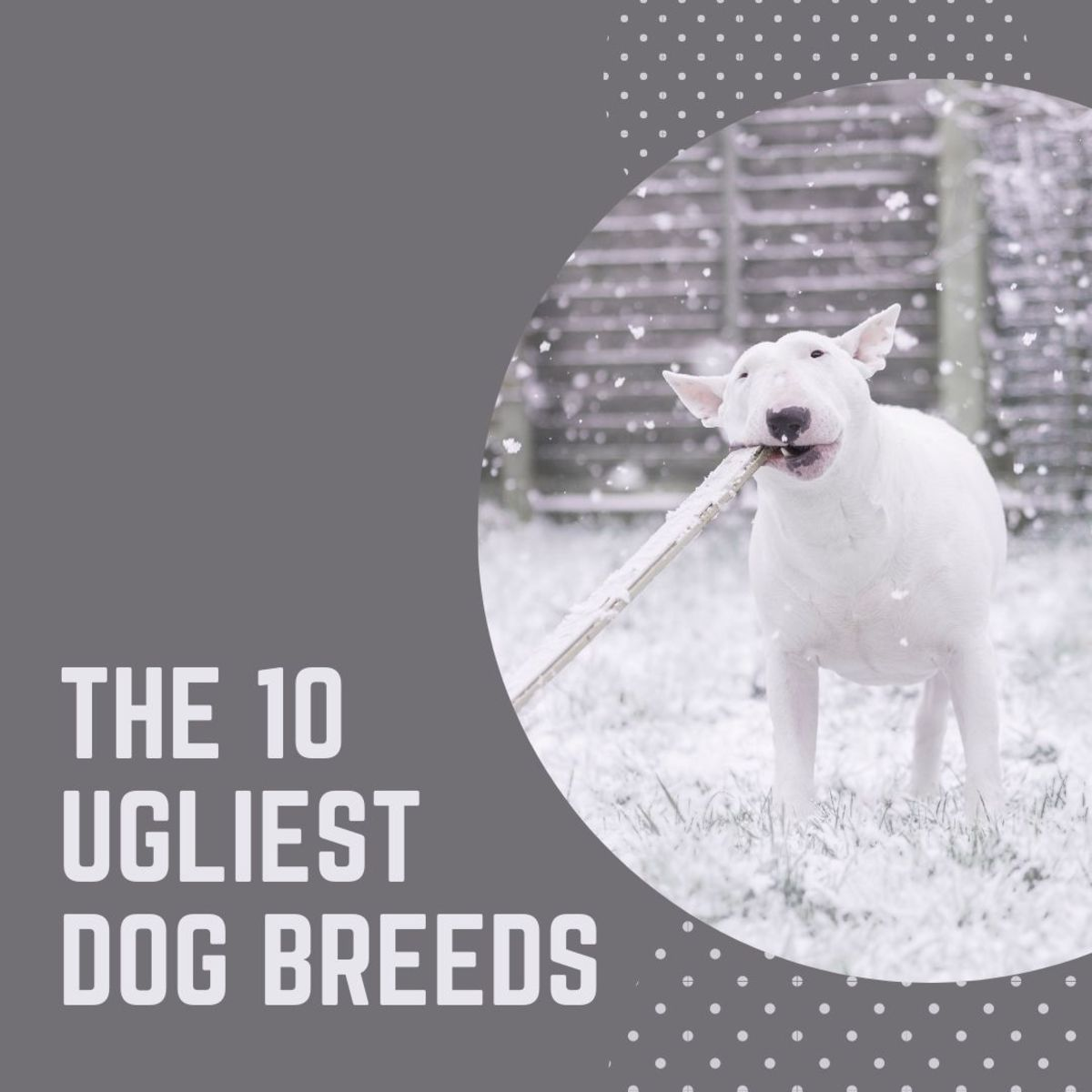 Ugly dogs: the 10 ugliest dog breeds