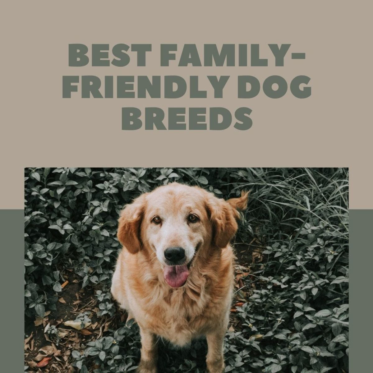 What are the best dog breeds for a family with kids?