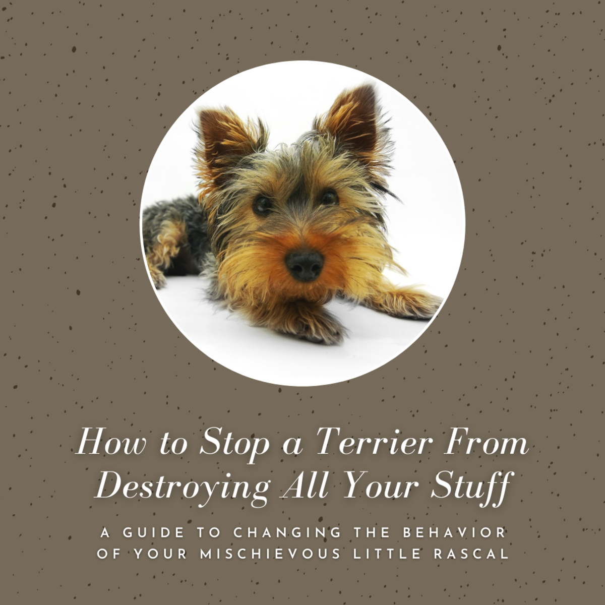 This guide will help you figure out how to get your beloved little terrier to stop ripping up all your possessions.