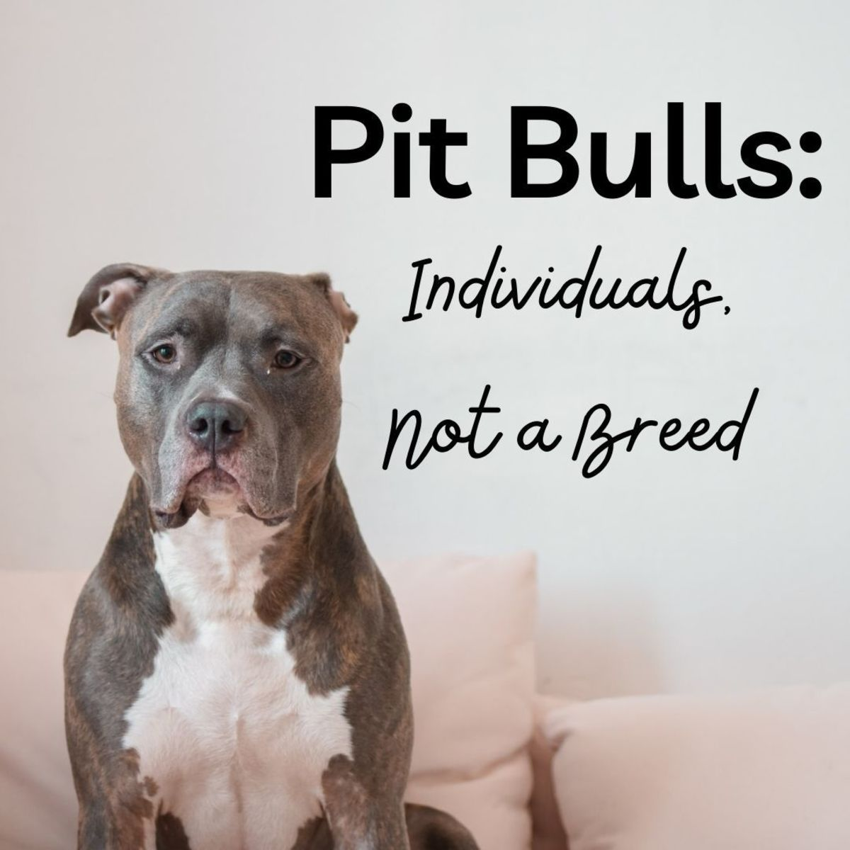 Pit bulls account for the largest percentage of dogs that find themselves in shelters around the country because of owner surrenders, strays, and overbreeding.