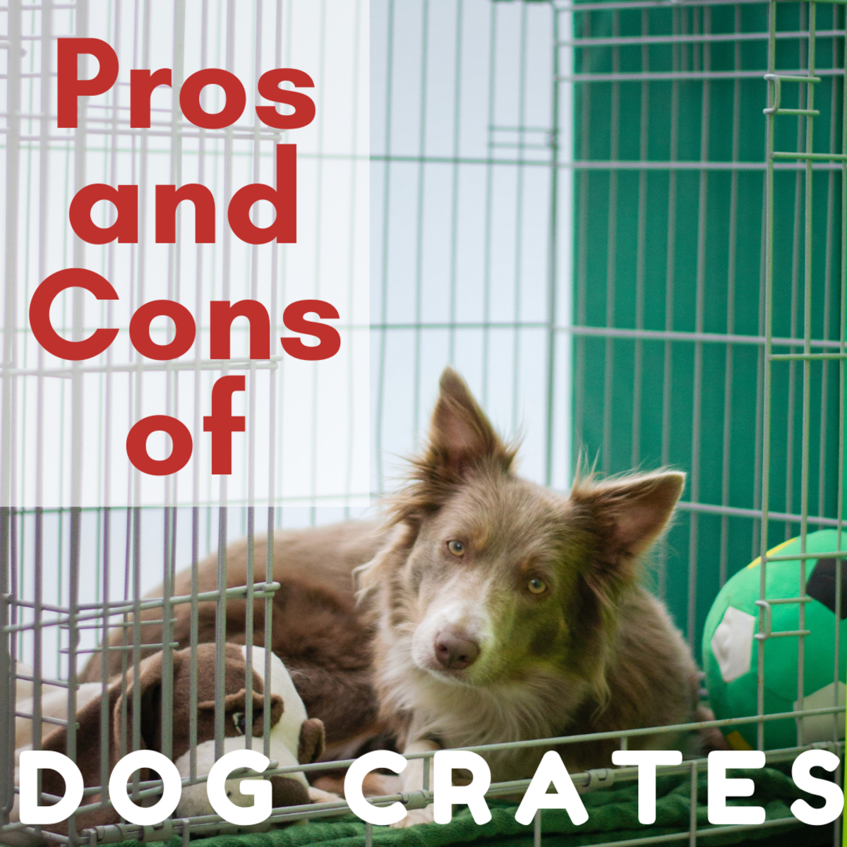 Why Every Dog Should Have a Crate