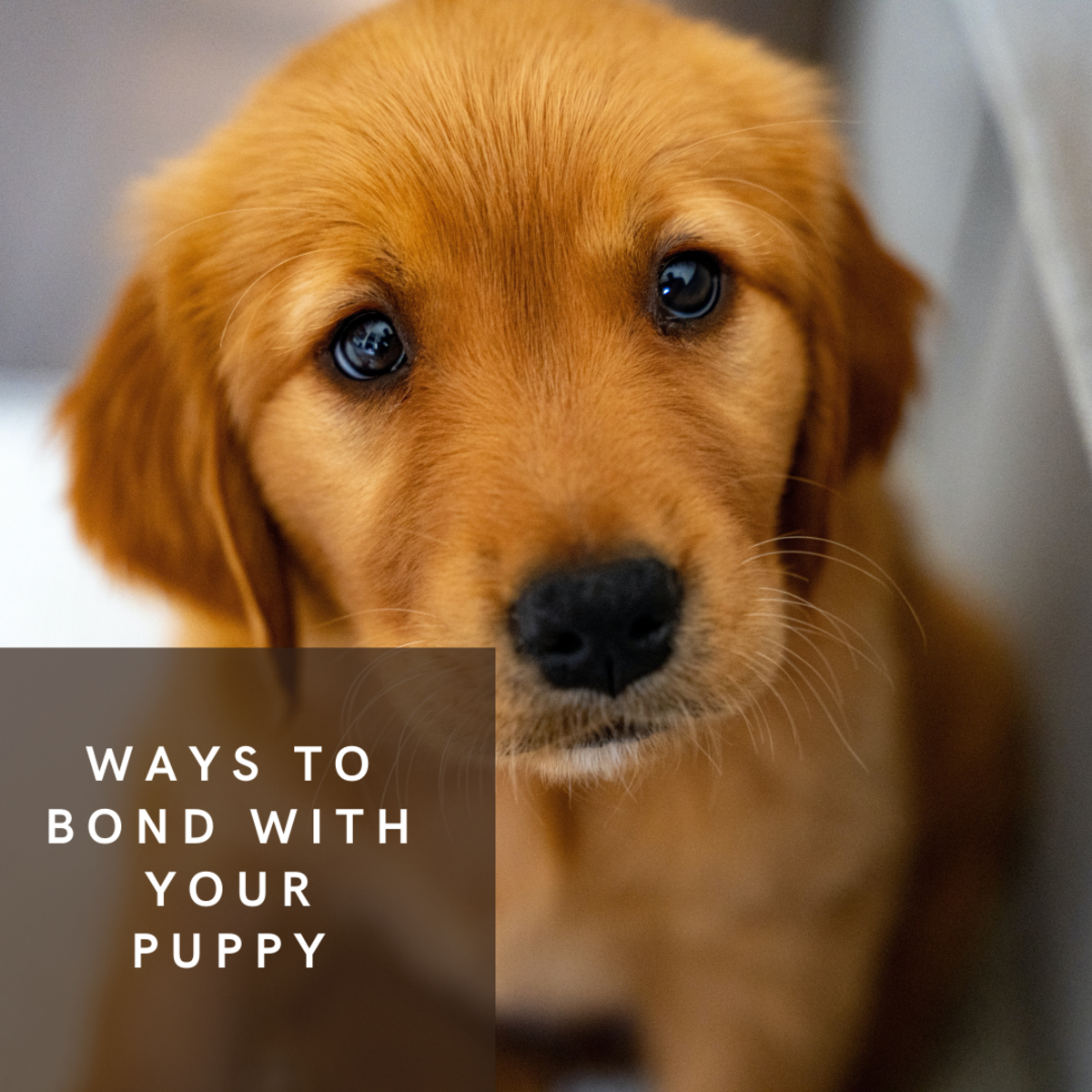 It's important to bond with your new puppy.