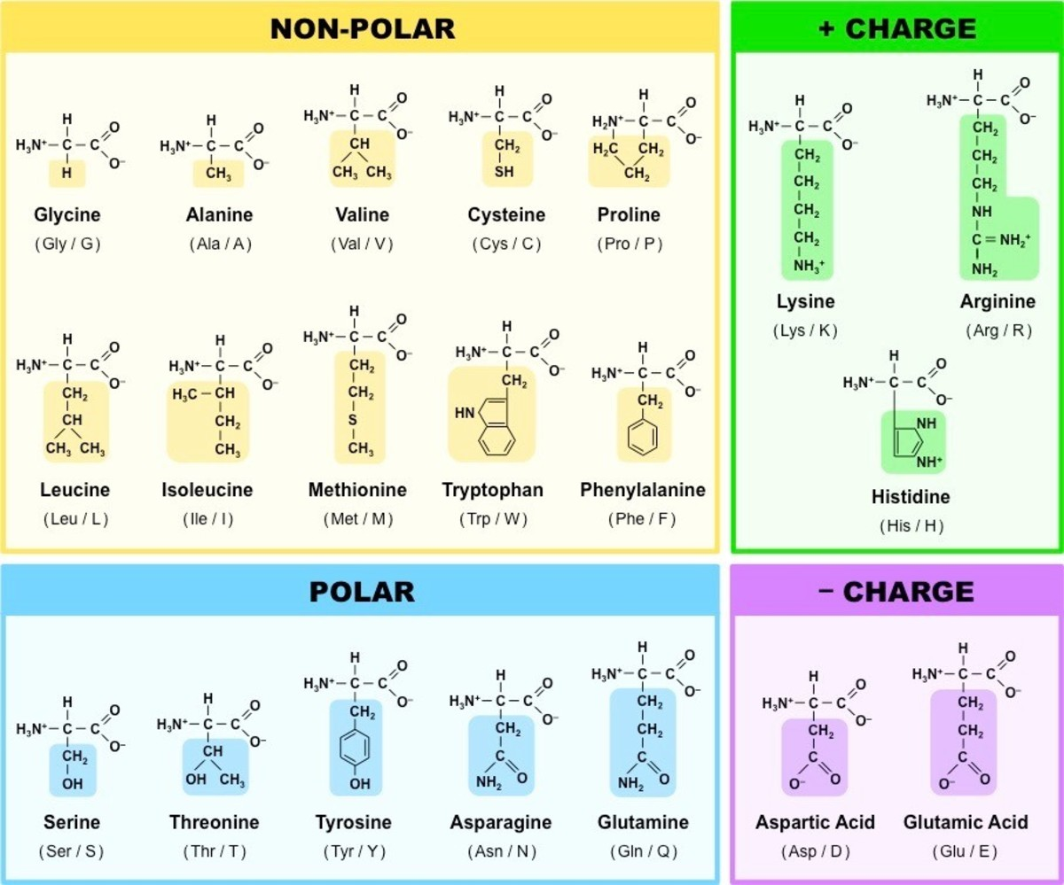 biology-3-chemical-bases-of-the-life-2