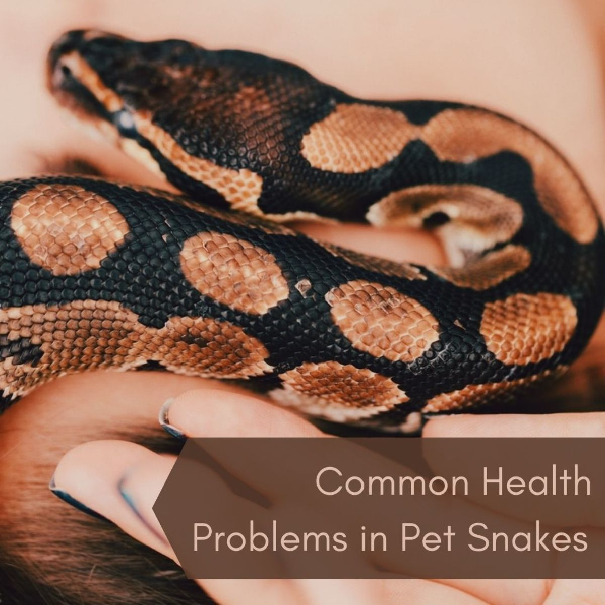 Common Health Problems in Pet Snakes