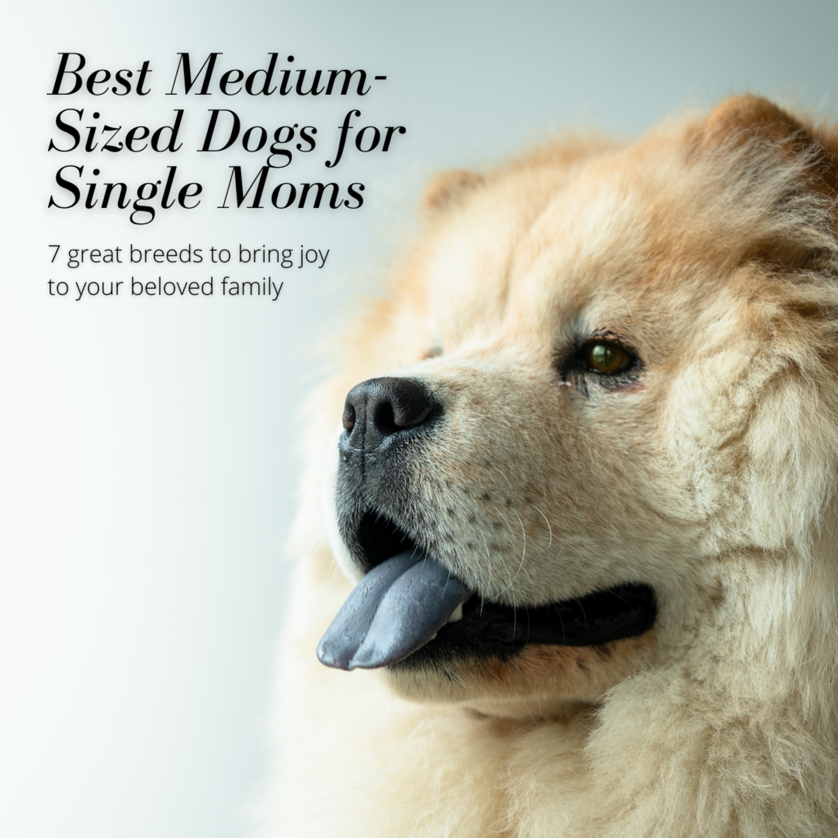 Best 7 Medium-Sized Guard Dogs for Single Moms