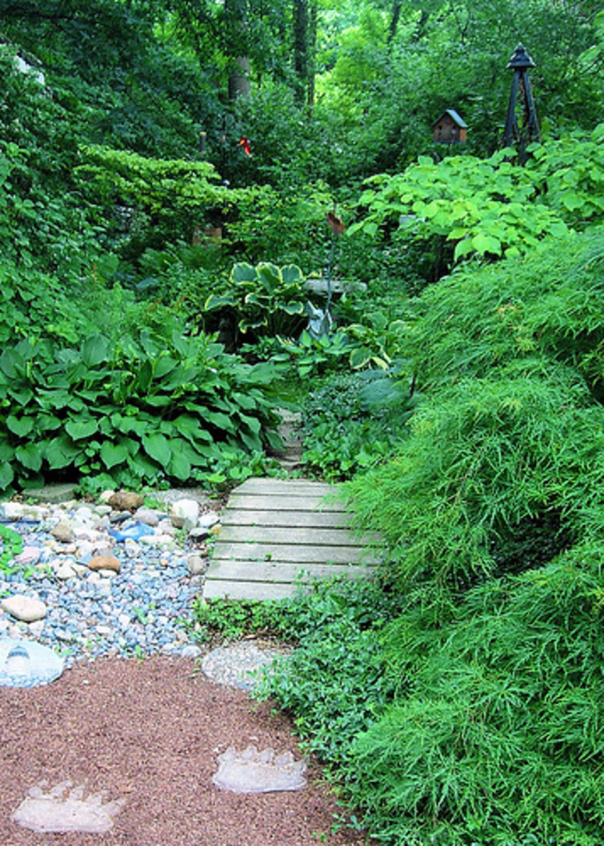 A beautifully layered, naturalistic shade garden. Photo by SleepingBear