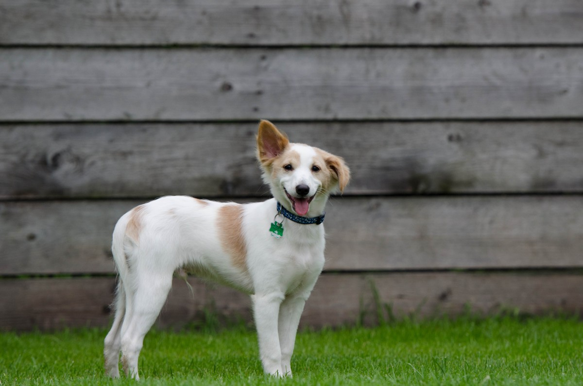 Young dog at Dog Run CCO-BY-SA Public Domain