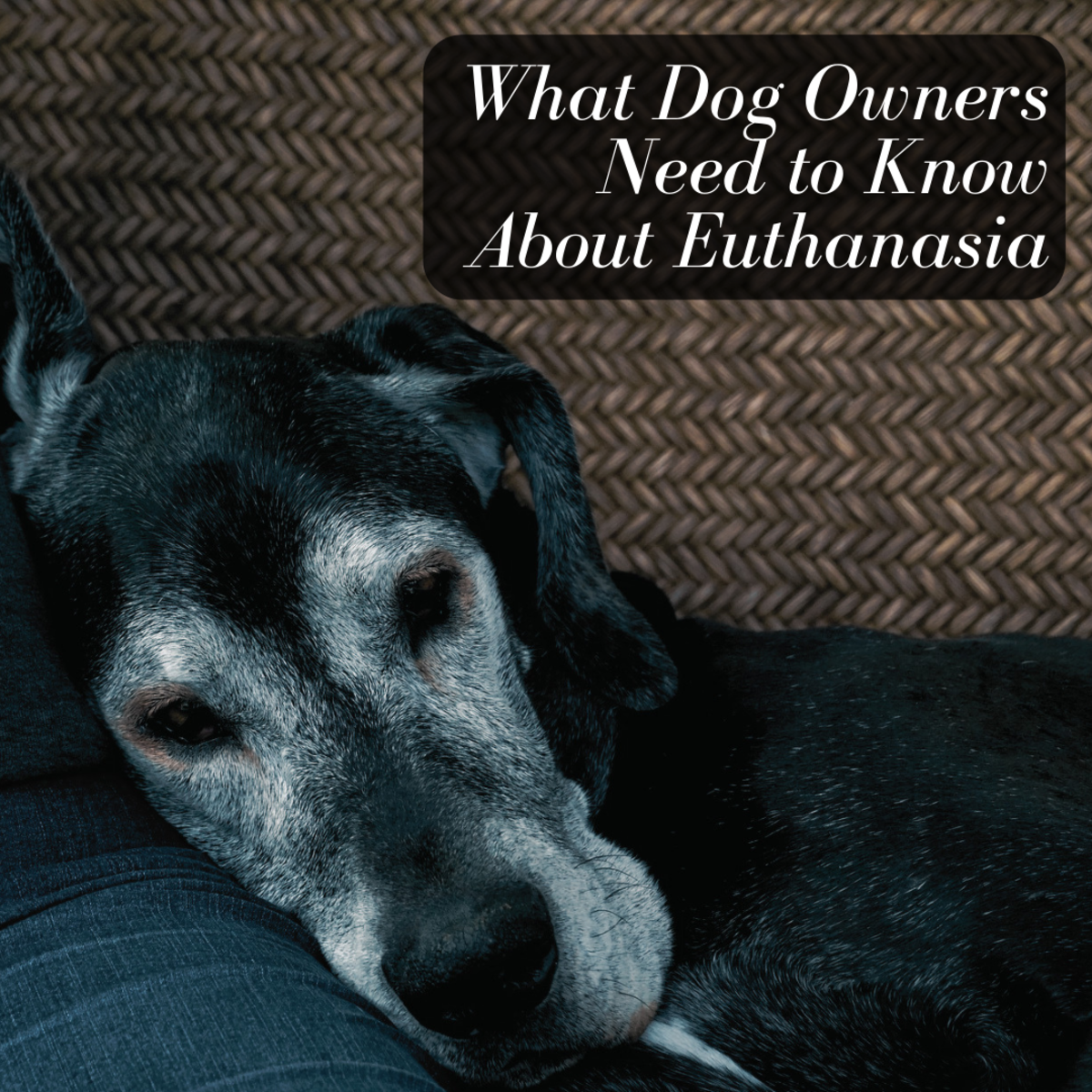 This article will provide you with everything you need to know about the process of euthanizing your family dog, including how to determine their quality of life and what the process is like.
