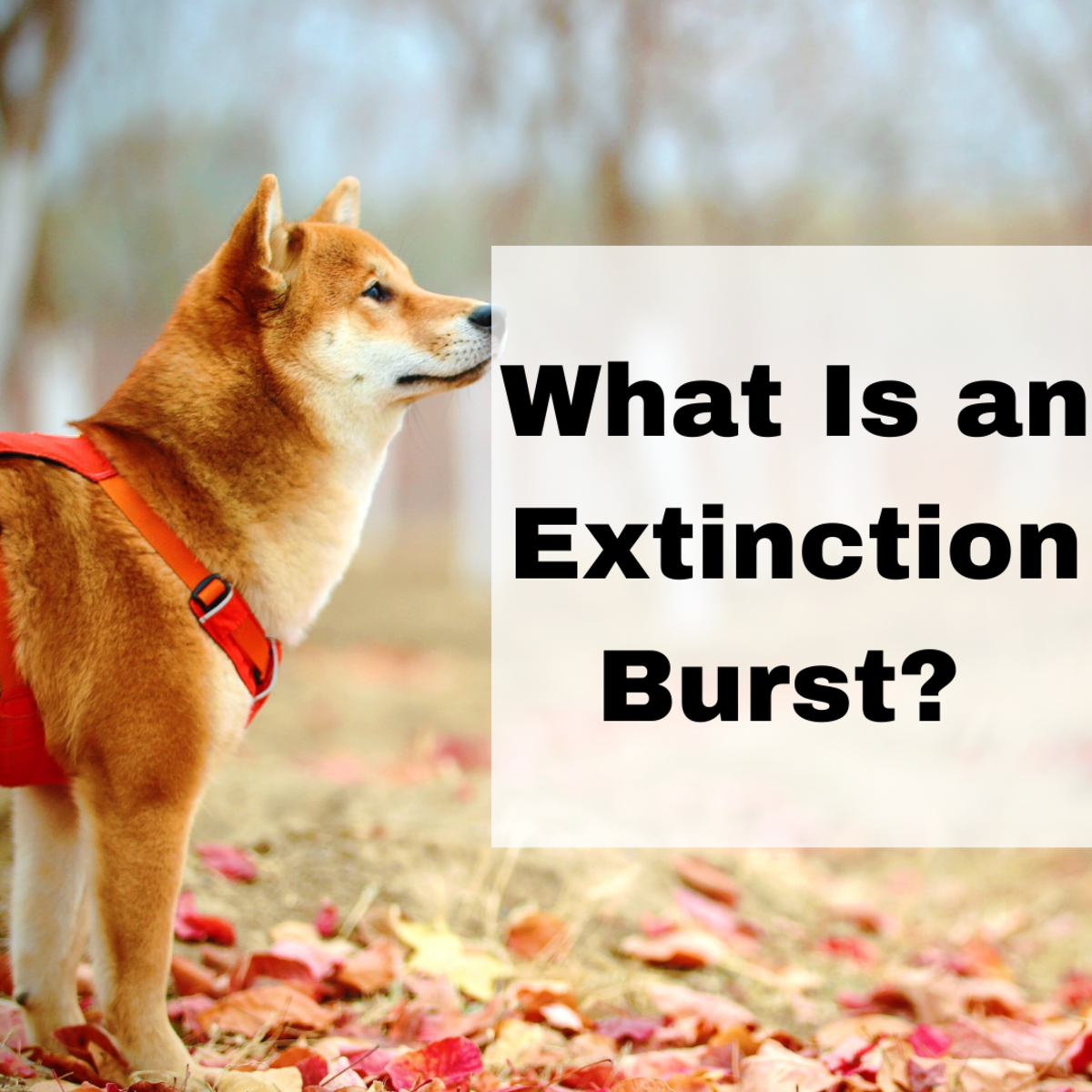 Learn all about extinction bursts in this article.