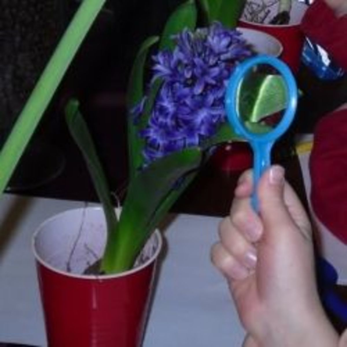 Observing parts of a flower