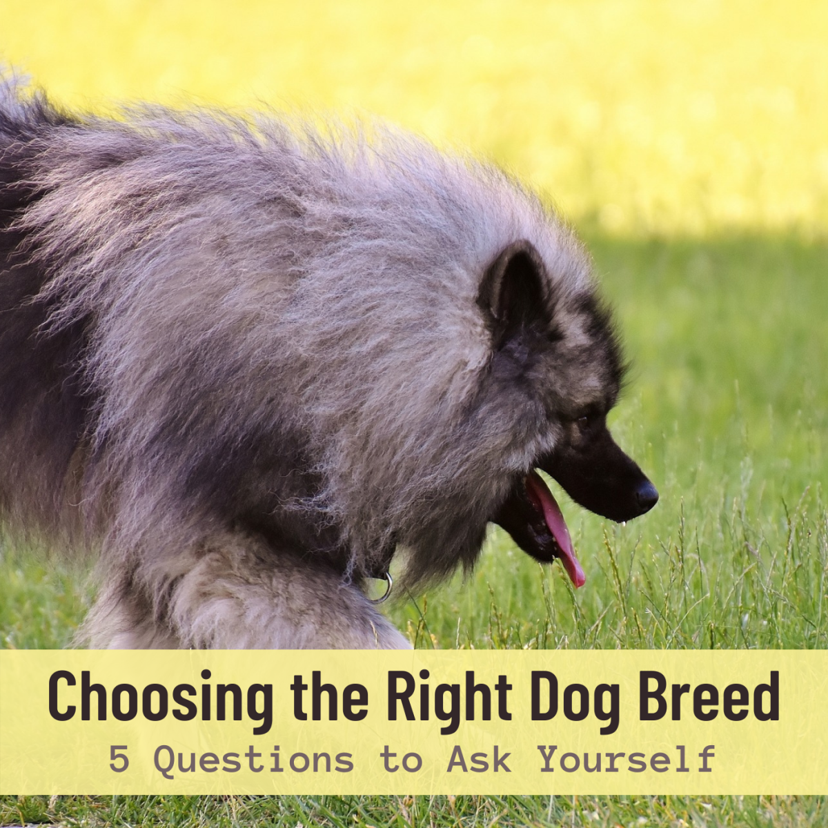 """No dog breed is """"one size fits all."""" Consider these questions to make sure you choose the right breed for your situation and family."""