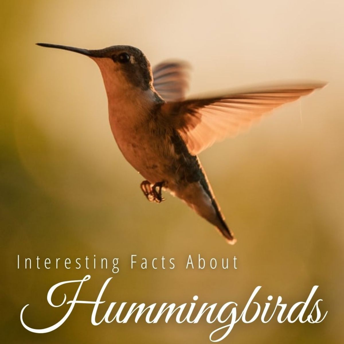 There are 16 species of hummingbird in the United States.