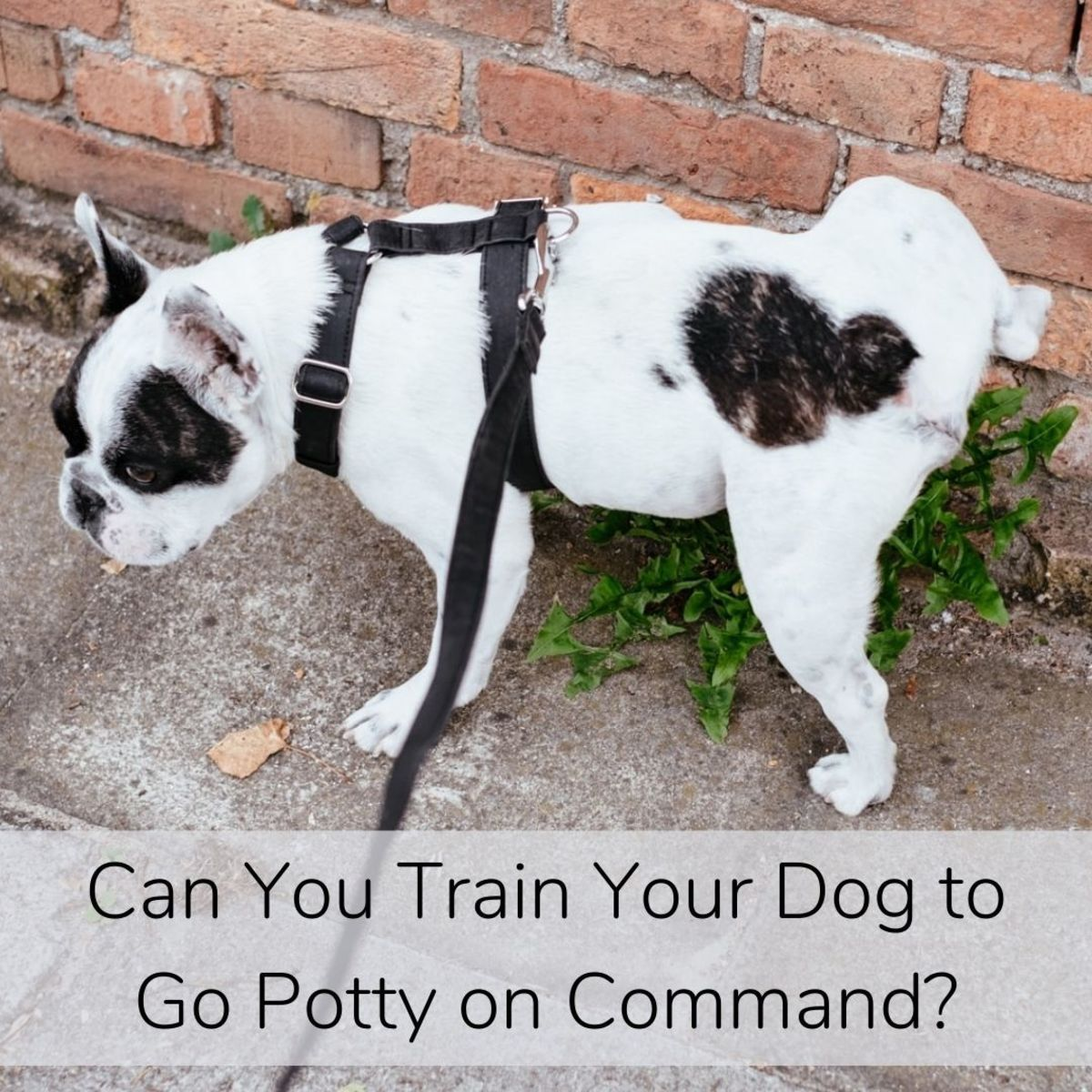 By putting the action of going potty on cue, you will help your dog generalize, upping the chances for going in areas that do not look much familiar.