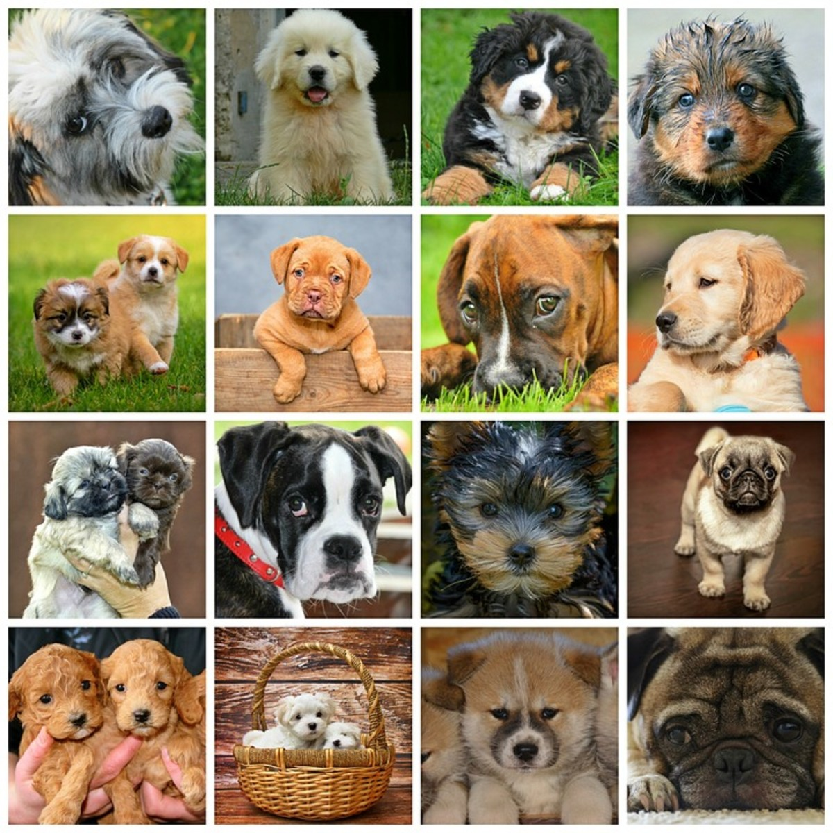 dog breeds at a glance