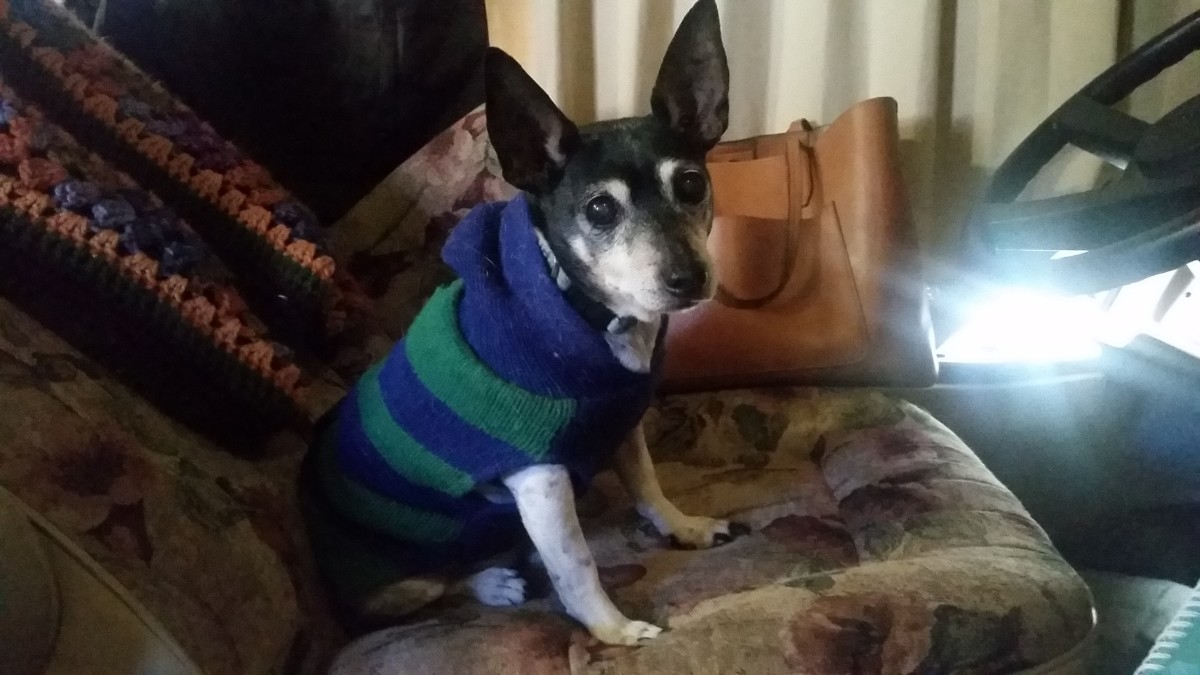 A comfy sweater, like the one Hank is wearing here, can be good to have if you're visiting cooler places on your road trip with your dog.