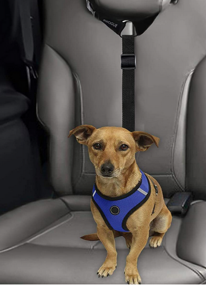 A dog seatbelt harness can save their life in an accident.