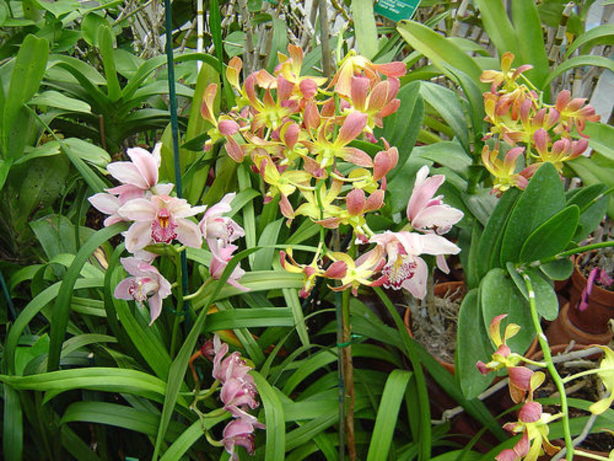 Orchids at Franklin Park Conservatory