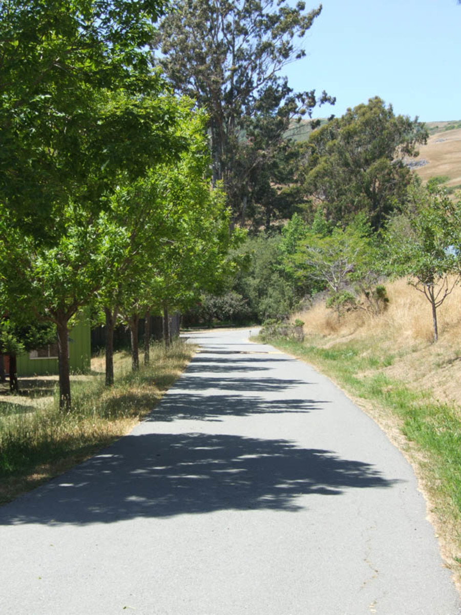 A path at Walker Creek Ranch in Marin County, CA, a venue used for HSP Gatherings since 2001.