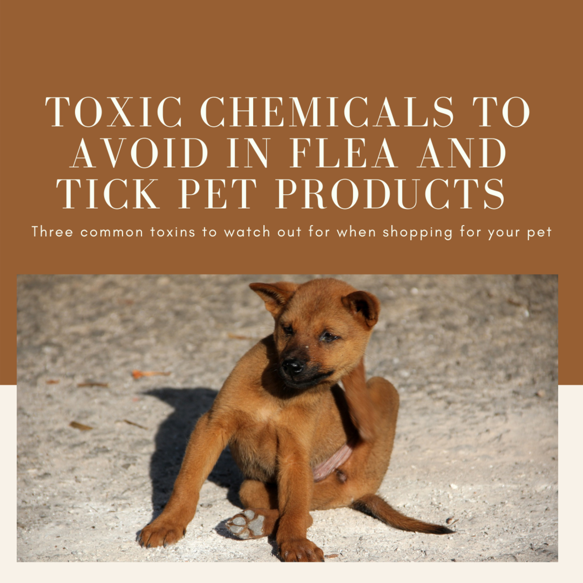 Toxic Chemicals Commonly Found in Flea and Tick Products