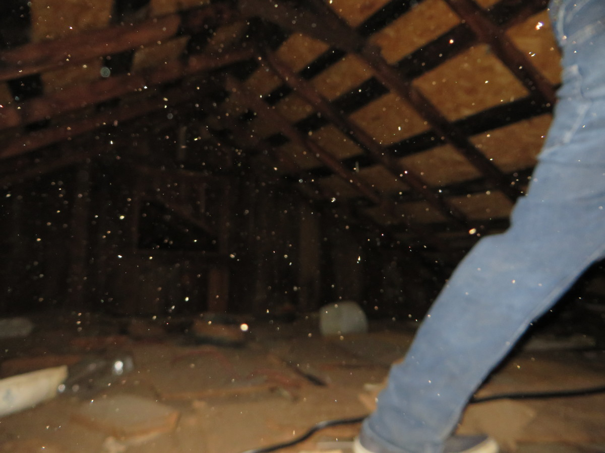 The orbs can be seen surrounding everywhere.